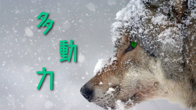 堀江貴文、多動力