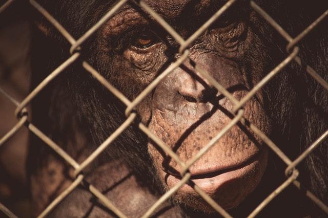 猿の惑星:新世紀(ライジング